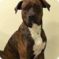 Adopt A Pet :: Tiarrah - Lewistown, PA