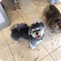 Adopt A Pet :: Finn - Snyder, TX