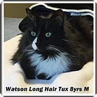Adopt A Pet :: Watson - Brandon, FL
