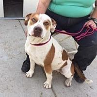 Adopt A Pet :: Princeton - Sacramento, CA