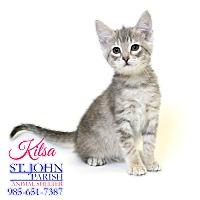 Adopt A Pet :: Kitsa - Laplace, LA