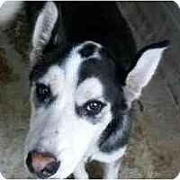 Adopt A Pet :: Winkie--Pending! - Belleville, MI