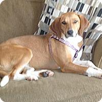 Adopt A Pet :: Sadie - Hamilton, ON