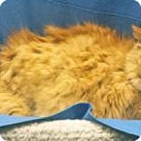 Adopt A Pet :: Sammy - Colorado Springs, CO