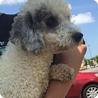 Adopt A Pet :: Button - St. Petersburg, FL