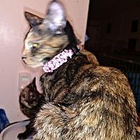 Adopt A Pet :: Andrea - Rocky Hill, CT