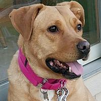 Adopt A Pet :: *AARF* - Monica - Detroit, MI
