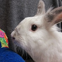 Adopt A Pet :: Quinton - Newport, DE