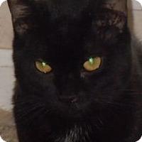 Adopt A Pet :: Zeus - Jacksonville, NC