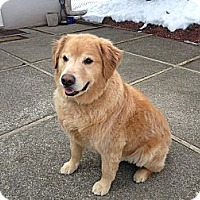 Adopt A Pet :: Luke - New Canaan, CT