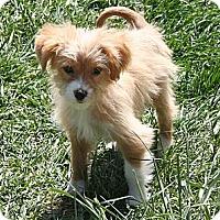 Adopt A Pet :: Sammy - Westfield, IN