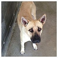 Adopt A Pet :: Brandi - FOSTER NEEDED - Seattle, WA