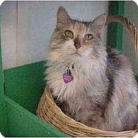Adopt A Pet :: Cammie - El Cajon, CA
