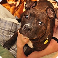 Adopt A Pet :: Archer - Trenton, NJ