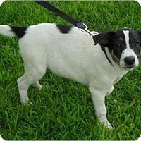 Adopt A Pet :: Rachel - Normandy, TN
