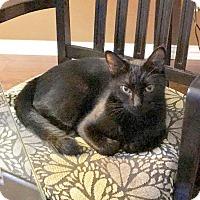 Adopt A Pet :: Mama Precious - Arlington/Ft Worth, TX