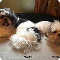 Adopt A Pet :: Monty & Watson - Jacksonville, FL