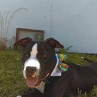 Adopt A Pet :: Cash - Greensboro, NC