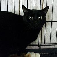 Adopt A Pet :: Gin - Windsor, CT