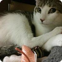 Adopt A Pet :: CASSIDY - Brea, CA