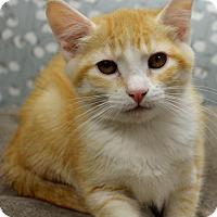 Adopt A Pet :: Maddie - Horn Lake, MS