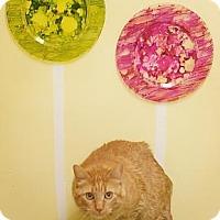 Adopt A Pet :: Lily - West Des Moines, IA
