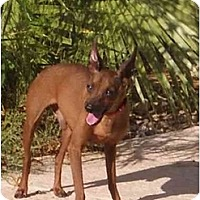 Adopt A Pet :: Gigit - Phoenix, AZ