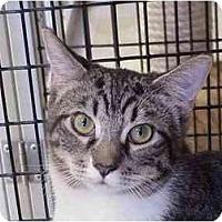 Adopt A Pet :: Comet & Halley - Deerfield Beach, FL