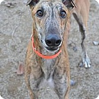 Adopt A Pet :: Groucho (Gabe Groucho) - Chagrin Falls, OH