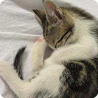 Adopt A Pet :: Tammy Wynette - Florence, KY