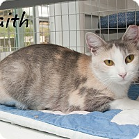 Adopt A Pet :: Faith - Waynesville, NC