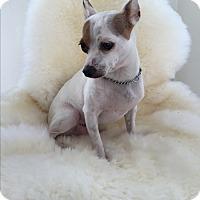 Adopt A Pet :: Marshmellow - Santa Monica, CA