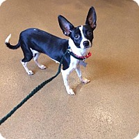 Adopt A Pet :: Roo - Acworth, GA