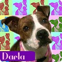 Adopt A Pet :: Darla - Des Moines, IA