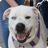 Adopt A Pet :: Stella - Winder, GA