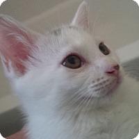 Adopt A Pet :: Carlie - Houston, TX