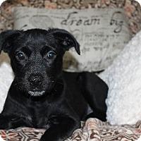 Adopt A Pet :: Keva - Alpharetta, GA