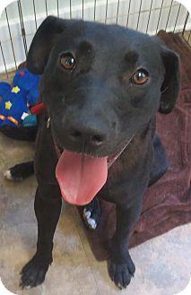 Labrador Retriever Mix Dog for adoption in Cambridge, Maryland - Tasha