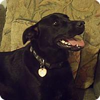 Adopt A Pet :: Callie - Franklin, TN