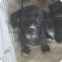 Adopt A Pet :: Donald - Phoenix, AZ
