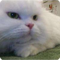 Adopt A Pet :: Tinkerbell - Columbus, OH