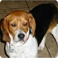 Adopt A Pet :: Bo - Blairstown, NJ