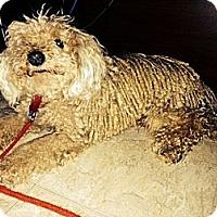 Adopt A Pet :: Malchik - Hamilton, ON
