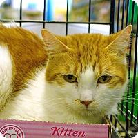 Adopt A Pet :: Juliet - Pittstown, NJ