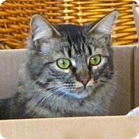 Adopt A Pet :: Bonbon - Davis, CA
