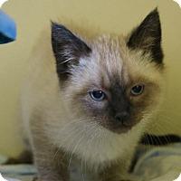 Adopt A Pet :: Crosby - Ann Arbor, MI