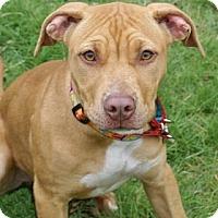 Adopt A Pet :: Mae - Framingham, MA