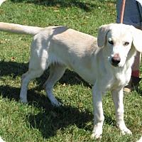Adopt A Pet :: Stanley - Richmond, VA
