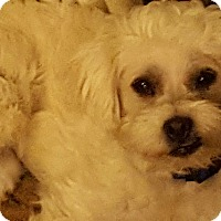 Adopt A Pet :: Demi - Kirkland, WA