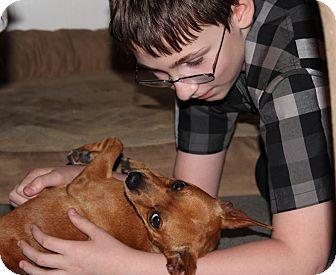 Miniature Pinscher Dog for adoption in METAIRIE, Louisiana - Poppy